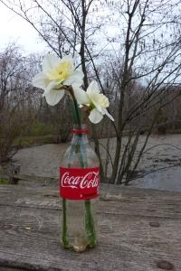 Coke and Daffodils_0421